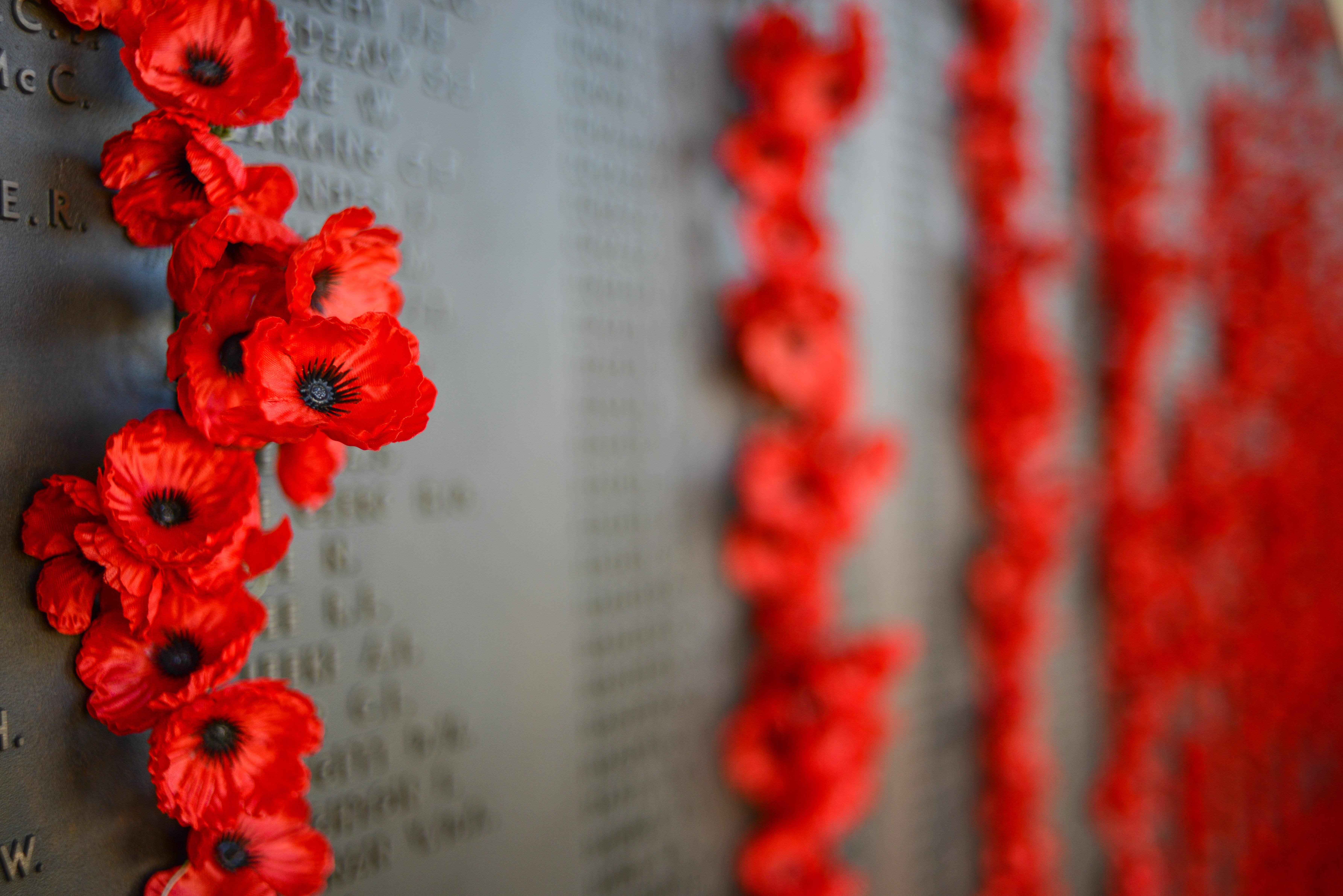 red poppy flowers on memorial
